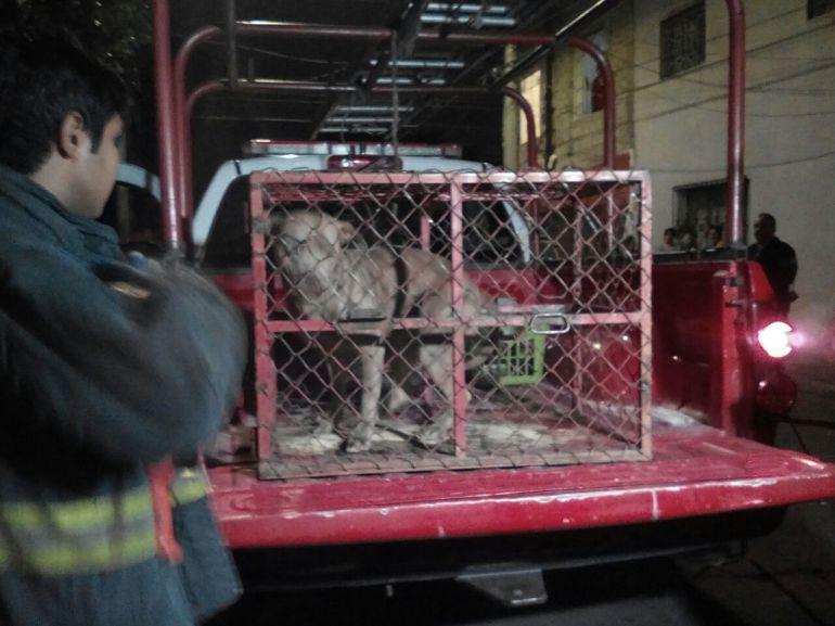 Perro ataca a niños en la colonia Fresno