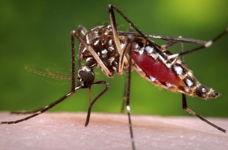 Al momento se registran 12 casos de Zika en el Estado