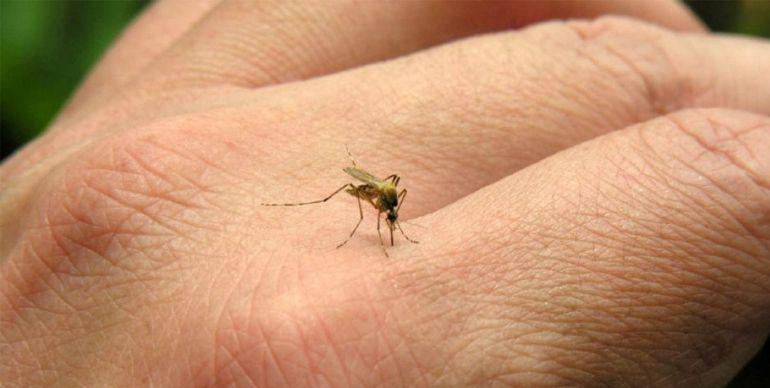 Michoacán intensifica medidas de prevención contra dengue y zika por lluvias