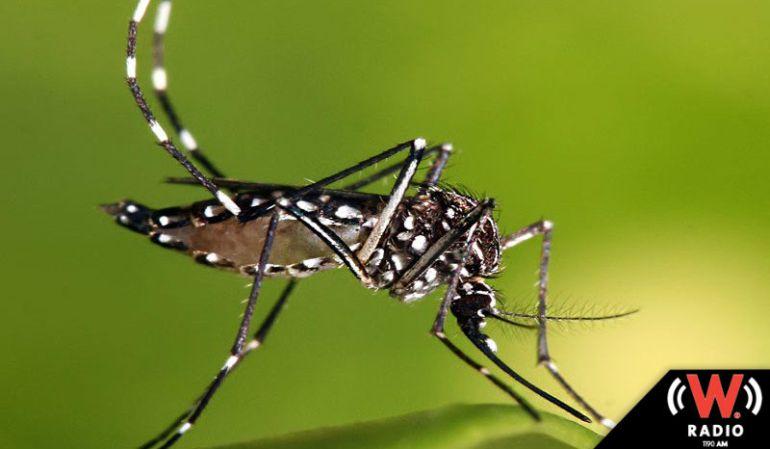 Disminuyen en Jalisco casos de Dengue, pese a las lluvias