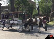 Un paro cardiaco fue la causa de la muerte de un caballo de calandria en Guadalajara