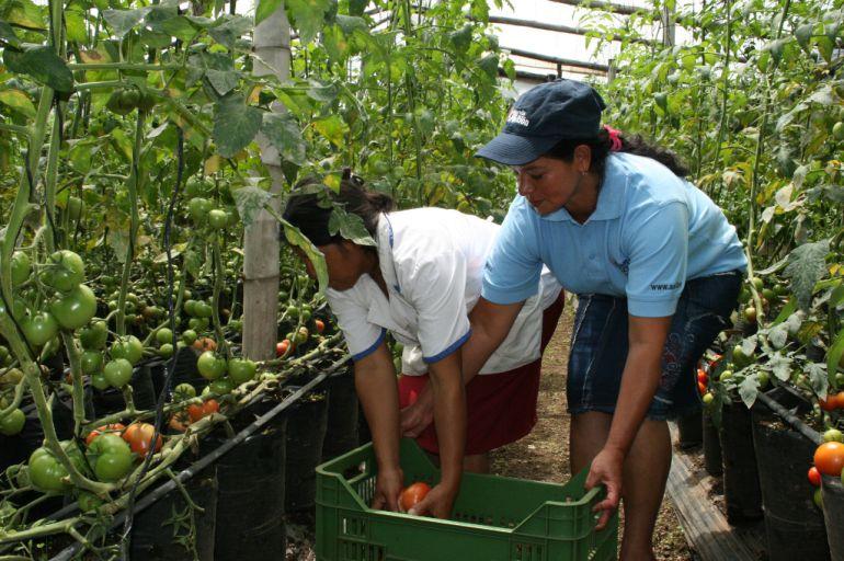 55% de los trabajadores del campo son mujeres