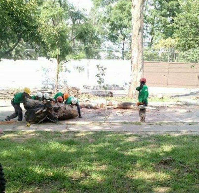Retiro de árboles en San Rafael no era tala: Alfaro