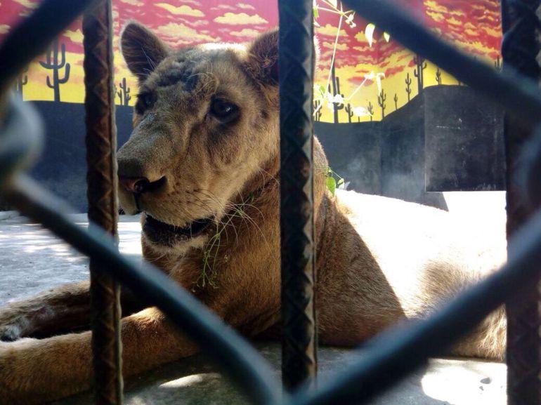 Unidad de Fauna Silvestre de Tlajomulco, referente nacional