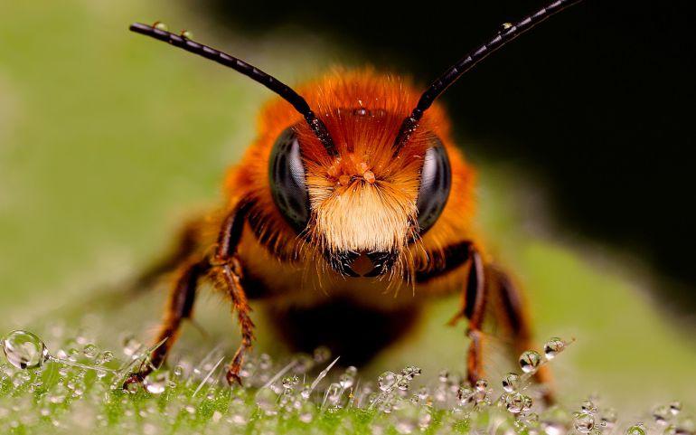 4 personas resultan lesionadas por picadura de abeja