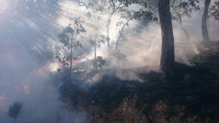 Incendio en bosque La Primavera afecta a 4.5 hectáreas