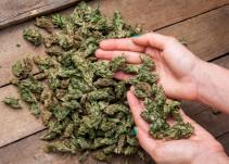 SEGOB descarta aprobación de uso recreativo de la marihuana