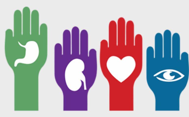La mayoría de los donantes de órganos son mujeres
