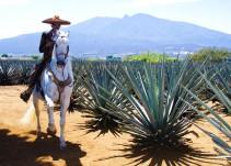 Proponen declarar Día Nacional del Tequila cada tercer sábado de marzo