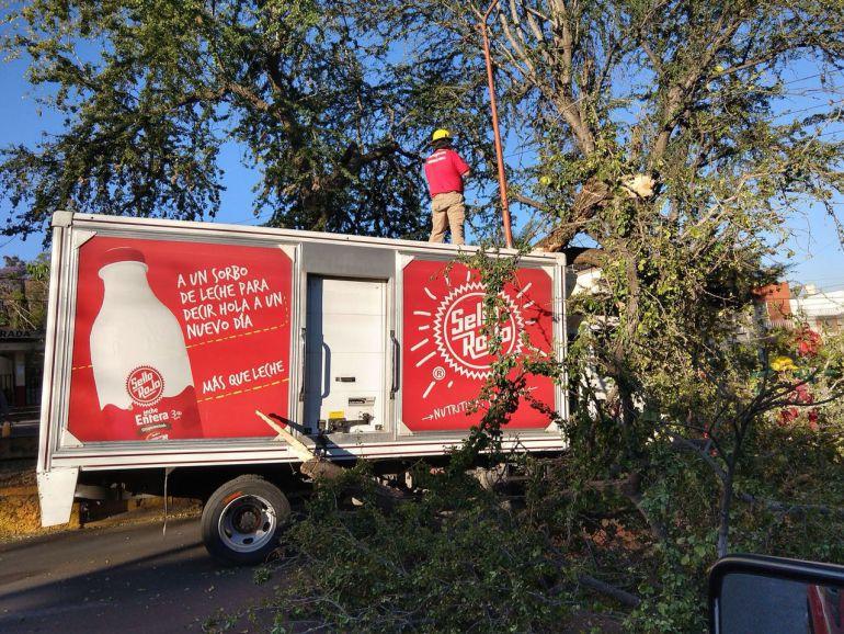 Un árbol cae sobre un camión repartidor en Tonalá