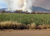 Atienden incendio forestal en Teuchitlá