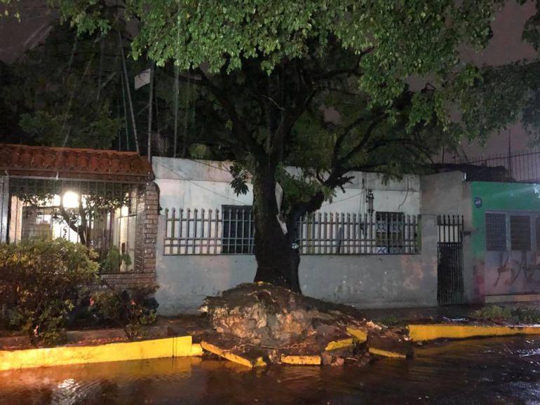 Lluvia deja varios árboles caídos