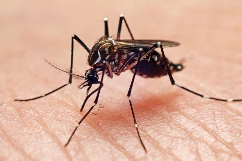 Disminuyen casos de dengue en Jalisco