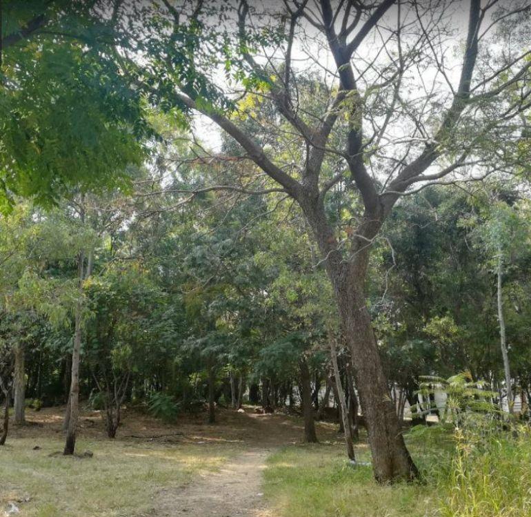 Niega Guadalajara que haya tala de árboles en el parque Arboledas del Sur