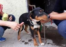 Detienen a la persona que torturaba perros en el municipio de Tlajomulco