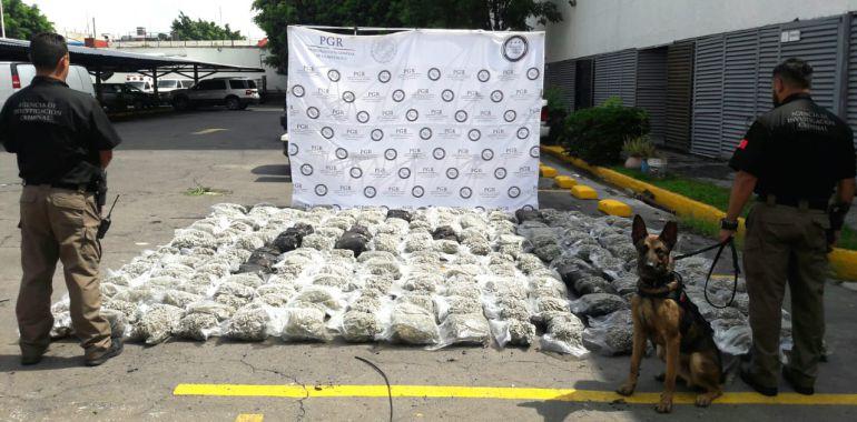 PGR decomisa 300 kilos de marihuana en Guadalajara