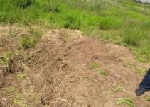 Localizan otra fosa clandestina; esta vez en el municipio de El Salto