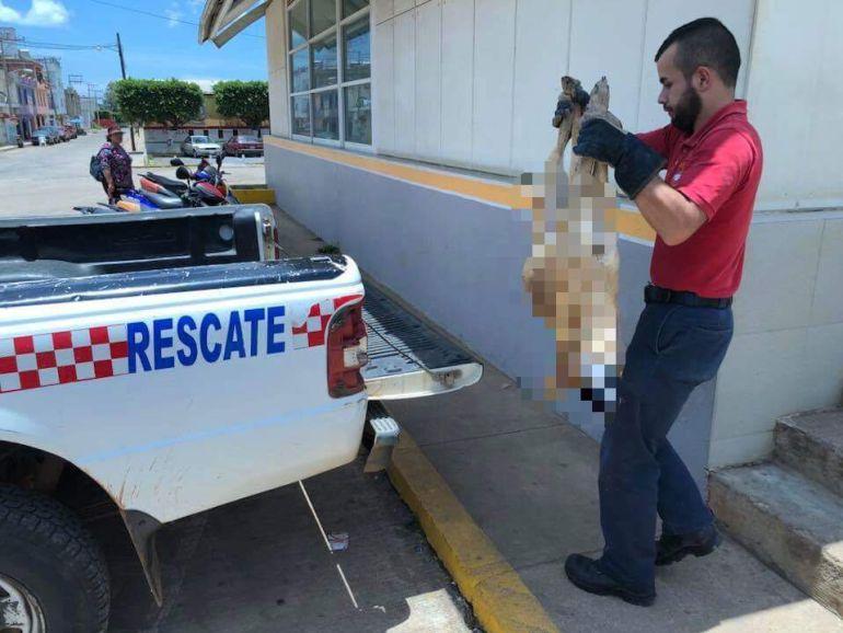 En Arandas se registra hallazgo de perros envenenados