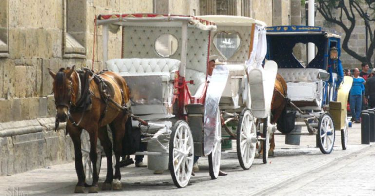 Modernización de carruajes no se detendrá y deja sin terreno a calandrieros tradicionales