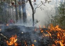 Hay 22 denuncias penales por incendios forestales