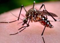 Casos de Dengue podrían incrementar en este temporal