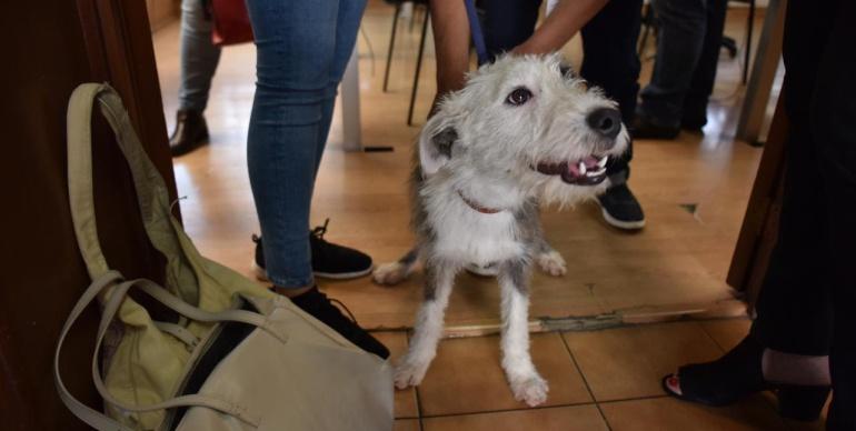Aquí te decimos cómo adoptar un perrito en Guadalajara