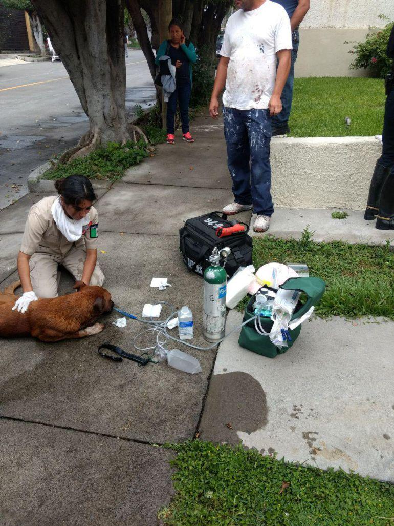 Bomberos de Zapopan rescatan a un perro de un incendio