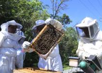 Jalisco lidera la producción de miel en México