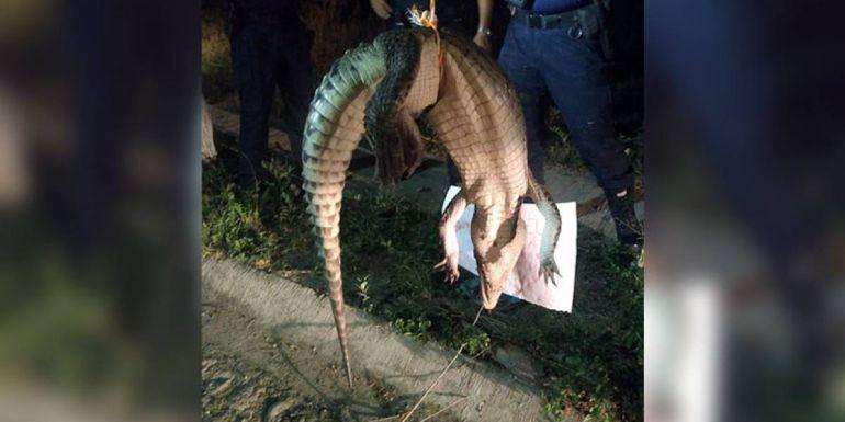 PGR investiga muerte del cocodrilo colgado en Puerto Vallarta