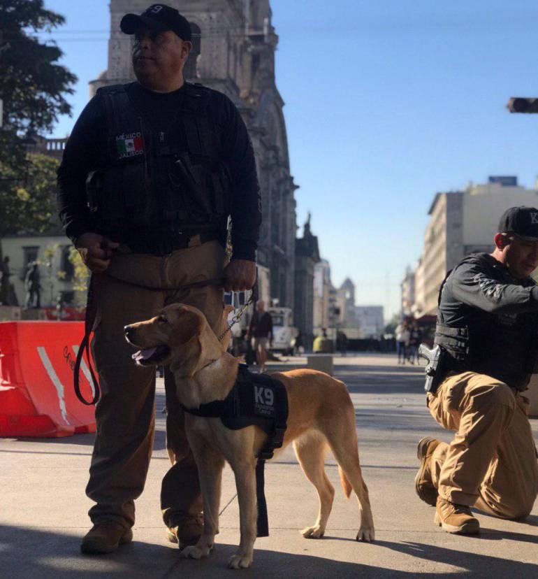 De la calle a policías: así los perros rescatados en Guadalajara