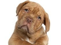 'Dramas de casa' con Melissa Mochulske. Los traumas de los perros adoptados.
