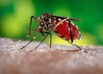 El virus del Zika llegó a Sudamérica, ¿en un avión?
