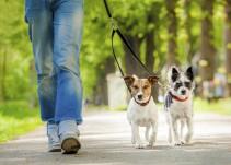 Crean mapa para...¿ubicar excremento de perro en las calles?