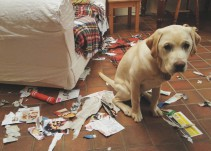 Los errores más comunes que cometemos al educar a nuestras mascotas