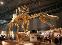 """""""Así Sopitas"""": Estudio revela nuevo descubrimiento sobre los dinosaurios"""