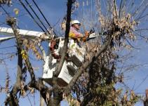 #YoDenuncio: Podan árboles para darle visibilidad a anuncios publicitarios