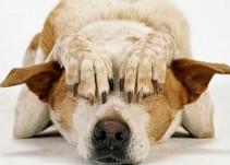 La pirotecnia afecta a los animales
