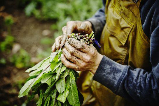 Conoce los beneficios de consumir productos orgánicos