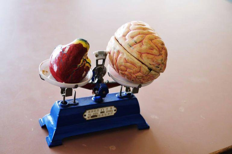 El cerebro vs la emoción