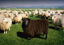 ¿Eres la oveja negra de la familia?