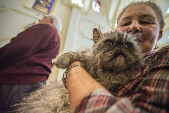 Animales de compañía, salud, veterinaria.: Mitos y realidades en la salud de las mascotas