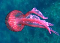 ¿Qué onda con los animales marinos y sus rarezas?