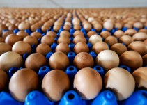 #AsíSopitas: Grave crisis de huevos contaminados afecta ya a siete países europeos