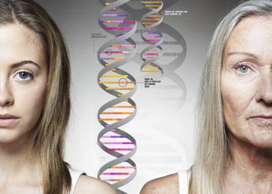 En un, dos, tres: el ABC del DNA