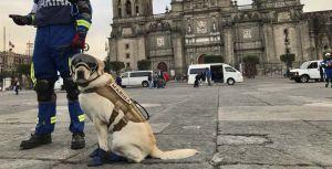 Frida también ha ayudado en rescates en Haití, Ecuador y Oaxaca