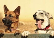 Lo que debes saber sobre los perros rescatistas