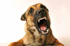 El ABC de la rabia, vacunas y desparasitación de tu mascota