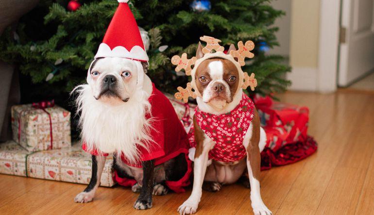 Animales adopción: ¡No regales mascotas en navidad!