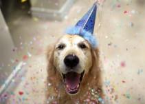 Día mundial del perro: ¿Cómo entender su mente?