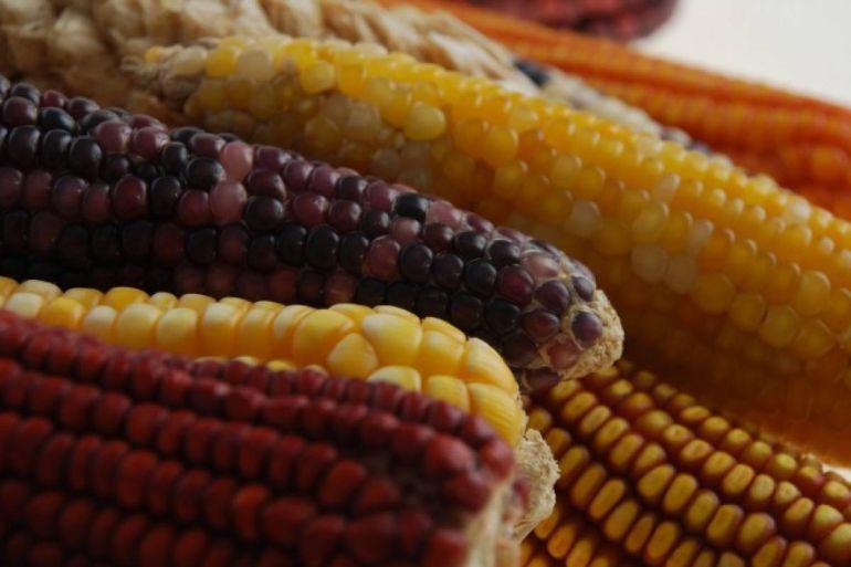 El maíz y la gastronomía de nuestro país